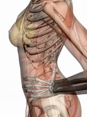 huesos y músculos