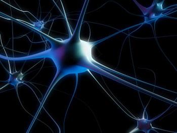 Convierten células de la piel en neuronas
